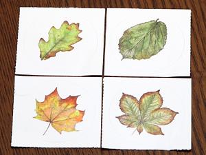 木の葉ステッカー