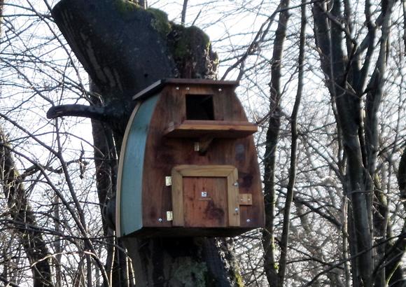 メンフクロウの巣